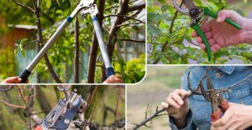 Обрезка яблони весной – как стать мастером ножовки и секатора?