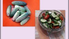 Семена огурцов – верный выбор для большого урожая!