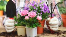 Выращивание цветов в домашних условиях – советы новичкам
