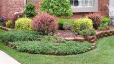 Декоративные кустарники – как правильно разместить на участке?