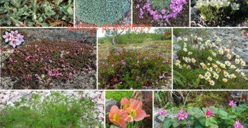 Цветы и растения для альпийской горки – делаем правильный выбор!