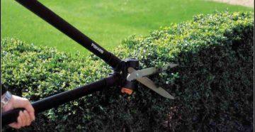 Стрижка живой изгороди – кусторез или ножницы?