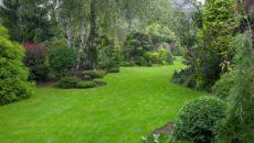 Декоративный газон – как круглый год любоваться зеленой лужайкой?
