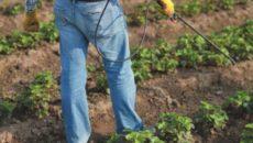 Обработка клубники весной – от вредителей спасение!