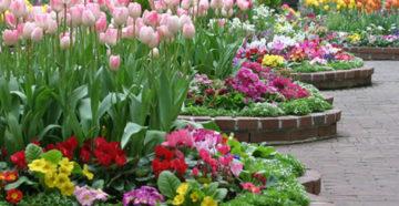 Оформление клумбы из тюльпанов как новый стиль для сада