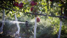 Полив яблонь – разве тут великая наука?