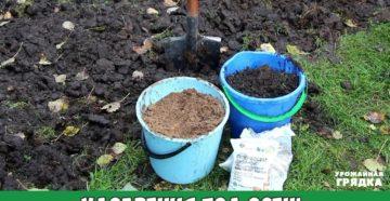 Подкормка растений весной – делаем все правильно!