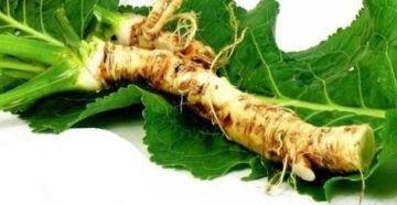 Корень и листья хрена – полезные свойства и народные методы лечения