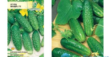 Семена огурцов для теплиц – выбираем самые лучшие сорта