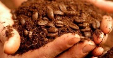 Кофейная гуща как удобрение – любителям кофе на заметку