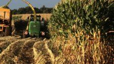 Способы уборки урожая кукурузы