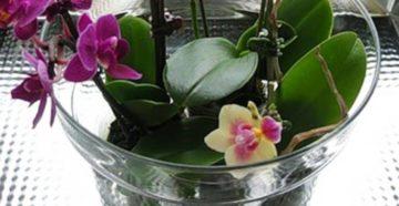Полив орхидей во время цветения – как обеспечить растение нужным количеством влаги?