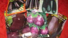 Семена баклажанов для открытого грунта – разноцветные сорта