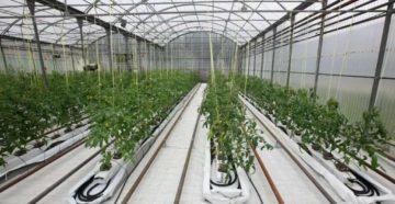 Отопление теплиц в зимнее время – свежие овощи и цветы зимой