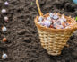 Удобрения для чеснока осенью – стремимся к хорошему урожаю