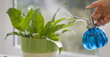 Как правильно поливать комнатные цветы и каковы критерии качества воды?