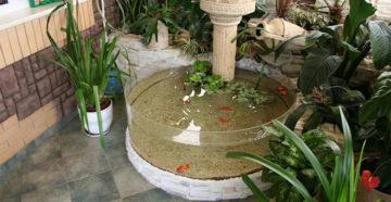Сад-аквариум или как сделать уютный уголок для рыб?