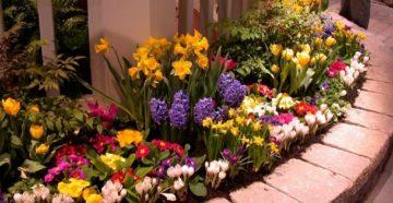 Посадка цветов весной на даче, чтобы получить красивую клумбу!