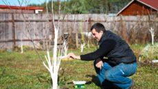 Уход за садом весной – готовим участок к новому сезону