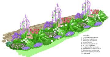 Схема посадки цветов на клумбе – делаем зарисовки!