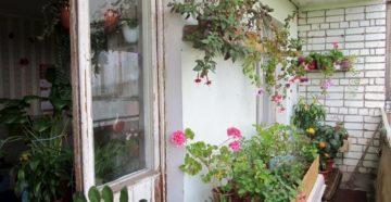 Оформление балкона цветами: все тонкости оранжереи дома