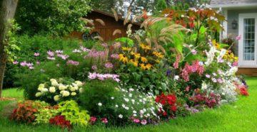 Самые неприхотливые садовые цветы – украшаем дачный участок в Сибири