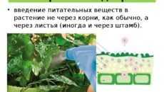 Подкормка мочевиной – кормим растение через листья