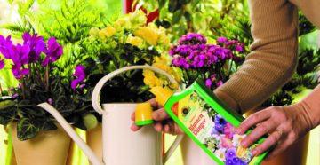 Эффективная подкормка цветов весной – выбираем методы