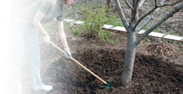 Уход за яблоней весной – от обрезки до удобрений!