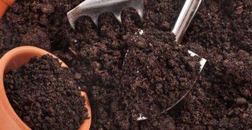 Подготавливаем грунт для рассады помидоров своими руками