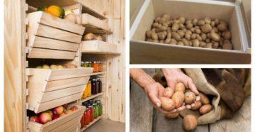 Хранение картофеля в доме – какие ошибки не допустить?
