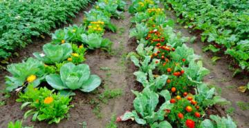 Правильная посадка овощей или какие ошибки не совершить?