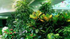 Декоративно-лиственные растения – настоящая оранжерея в доме