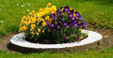 Однолетние цветы для клумбы или как сделать клумбу яркой?